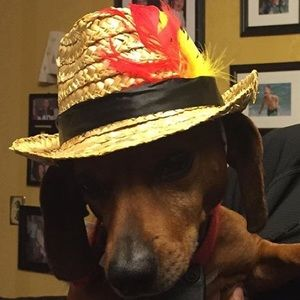 Pet Fedora Hat for Small Dogs, Cats